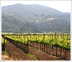 Monterey County's cool climate helps Riesling grapes ripen slowly and maintain their acidity.