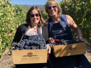 wine guides harvest grapes in Chile