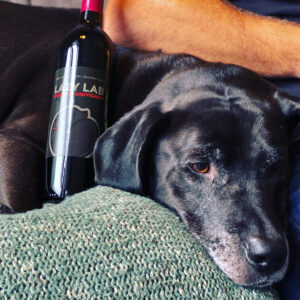 Black Labrador Dog with Bottle of Lazy Lab Cabernet